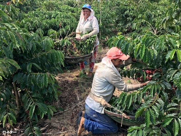 ブラジルのコーヒー農園=ロイター