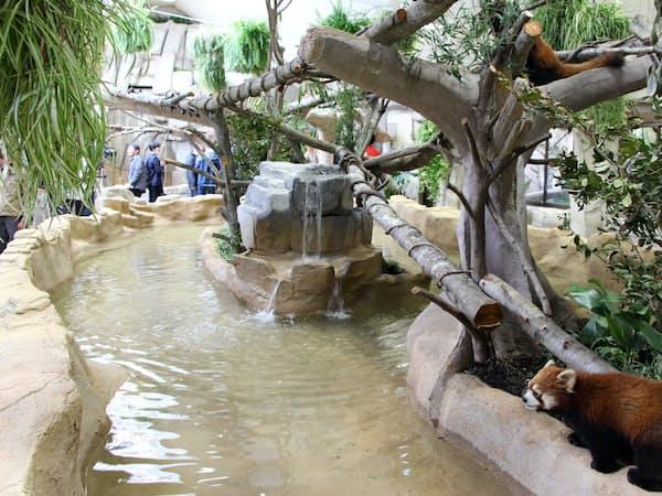 那須どうぶつ王国はレッサーパンダなどが住むアジアの森を新たに屋内施設で再現した