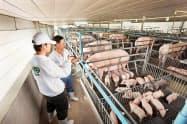 CPフーズはタイなどで養豚も手掛ける