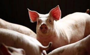 中国では14億人の国民が年間5500万トンの豚肉を消費する=ロイター