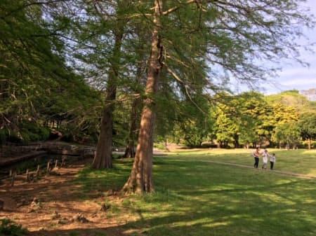 緑豊かな根岸森林公園は横浜市民の憩いの場になっている
