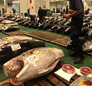 10連休を前に魚介類の入荷がピークを迎えた豊洲市場(東京・江東)。クロマグロやカツオも豊漁で安い