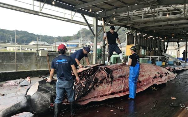 千葉県南房総市は関東唯一の捕鯨基地。400年以上続く伝統の漁でツチクジラが水揚げされると、地元は活気づく。