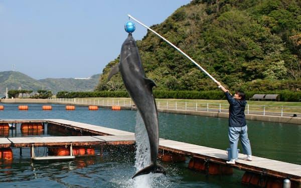 リニューアルオープン後はよりイルカを身近に感じることができるようになる(長崎県壱岐市)