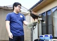 高校生鷹匠の小川涼輔さんとハリスホークのルギー(2日、群馬県榛東村)=共同