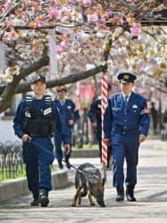 造幣局の「桜の通り抜け」の場内で不審物がないか調べる警備犬(4月、大阪市北区)