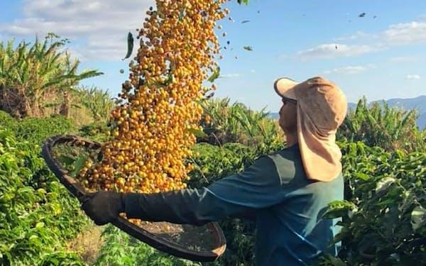 コーヒーの消費量は右肩上がりだ(ブラジルのコーヒー農園)