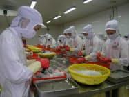 ベトナムではエビの養殖、加工が盛ん(ベトナムのエビ加工工場)
