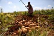 アフリカのサブサハラでは9割の国が農産物などの輸出に依存している(南アフリカの農家)=ロイター