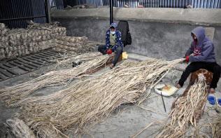 カトマンズ郊外にある「かんぽう」社の倉庫で、ミツマタを束にする農家の人たち(3月)=共同