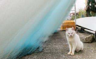 琵琶湖に浮かぶ沖島は淡水湖にある国内唯一の有人島だ。猫がのんびりと休む姿に島時間を感じる。沖島町離島振興協議会は5月から元漁師宅を活用した民泊を始めた=小川望撮影