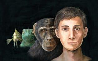 脊椎動物は原始的な魚類の段階で顔を獲得し、動物種ごとに様々な顔が生まれた。哺乳類では表情も生み出せるようになり、顔は様々な情報を提供するディスプレーになった(イラスト 大内田美沙紀)