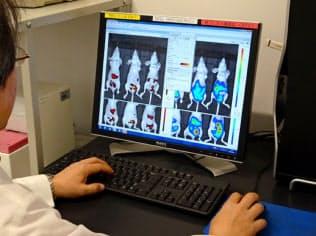 幹細胞を使ってウイルスをがんへ運び治療する研究を進める=兵庫医科大学提供