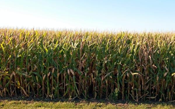 米国で作付け遅れの懸念が強まっている(米中西部のトウモロコシ畑)