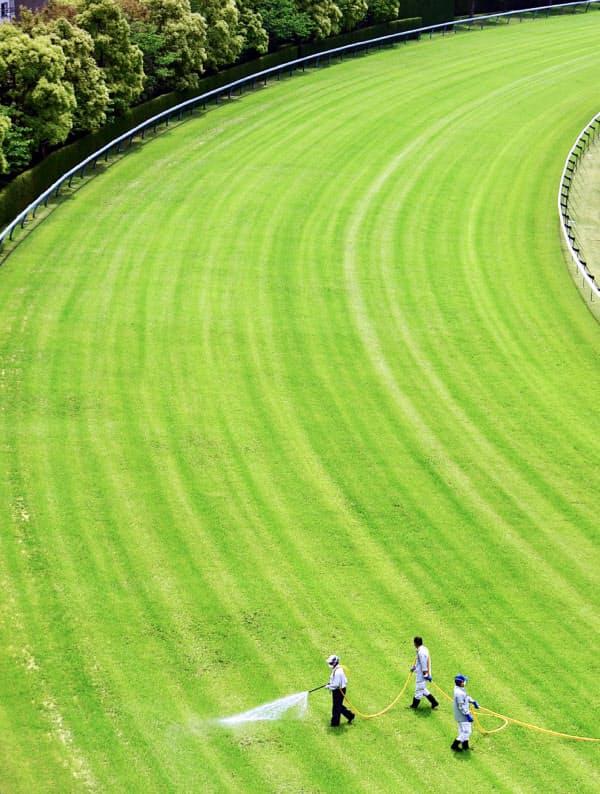 1~2日かけて芝コースにムラなく殺虫剤をまいていく(阪神競馬場)=目良友樹撮影