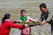 田植えをする北朝鮮の農民(5月)=AP