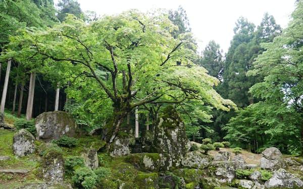 巨石が印象的に使われている館跡の庭園