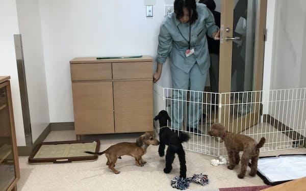 神奈川県の動物愛護センターは「生かすための施設」を目指す(平塚市)