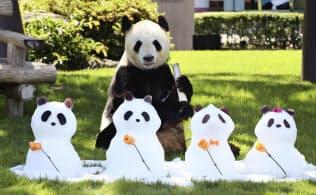 父の日に雪だるまをプレゼントされたジャイアントパンダ「永明」(16日午前、和歌山県白浜町のアドベンチャーワールド)=共同