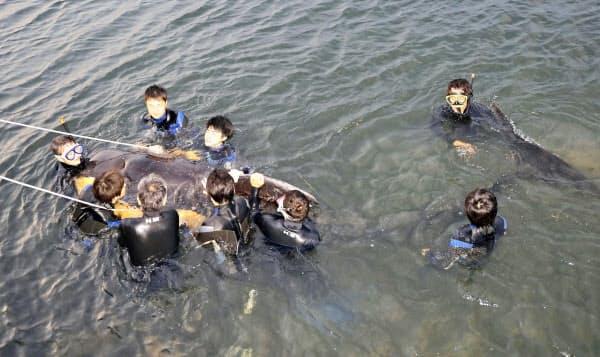 北九州市小倉北区の港に迷い込み、沖合に連れ戻すため捕獲されたクジラ(15日夕)=共同