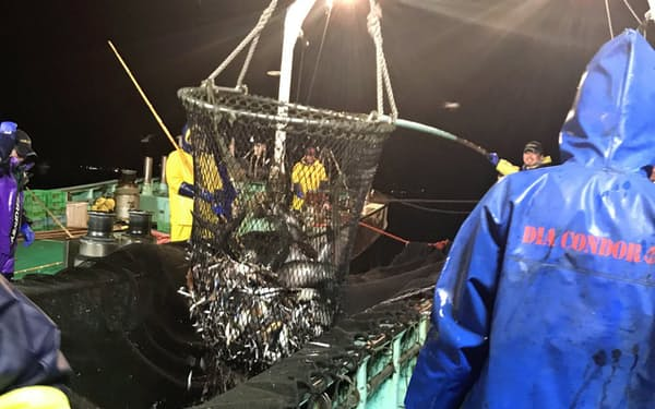 日本の沿岸は魚介類の宝庫。定置網には季節や地域によって、多種多様の魚がかかる。北海道の定置網には、サケのほか近年はブリやフグも混じるようになってきた。