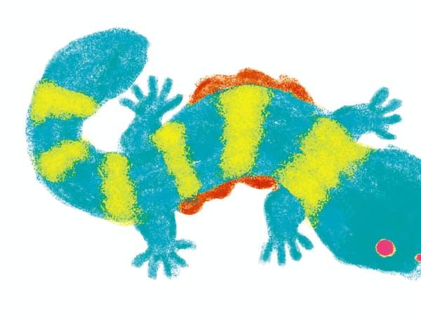 デジタルアートでオオサンショウウオの塗り絵が動くようにする(写真は色を塗ったイメージ)