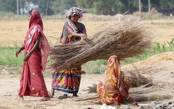 与党連合は農村部での劣勢を覆した(インド・ビハール州で農作業する住民)=三村幸作撮影