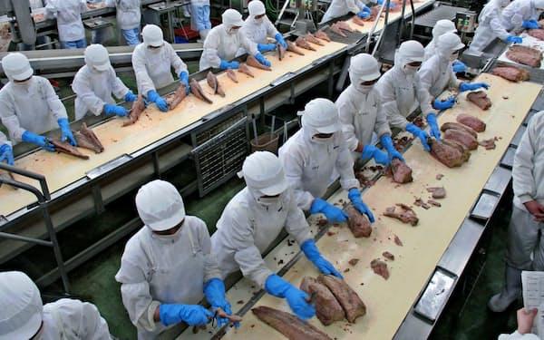 シーチキンはツナ缶の国内シェアの約5割を占める(静岡県焼津市の焼津プラント)