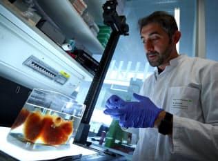 高度な専門知識を用いて新技術の研究開発に取り組むなど限られた業種の人が対象となる(脳科学の研究者)=ロイター