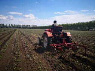 中国の大豆生産は大規模化に遅れている(黒竜江省)