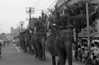 見物客が車道を歩くゾウを見守る(1970年8月)=王子動物園元飼育員の福田元二さん提供
