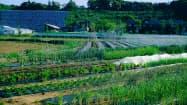 食用花の農場では収穫体験などを提供する
