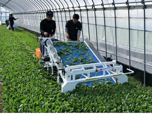 果実堂の技術支援でベビーリーフの栽培ハウス160棟規模を目指す(福岡県豊前市)