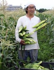 トウモロコシを朝、収穫する久木田幸城さん(6月20日、相模原市南区)=共同