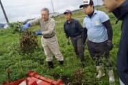 山形県金山町で始まった落花生の栽培(昨年の試験栽培の収穫風景)