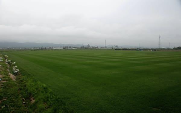 競技場のピッチのように鮮やかに刈り込まれた復興芝生(宮城県山元町)