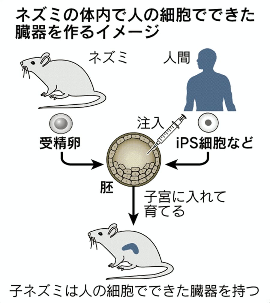 体 の の つくり イカ