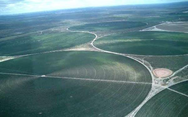 ブラジルは大規模な農園が多く、生産の機械化が進んでいる