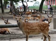 国の天然記念物「奈良のシカ」=共同