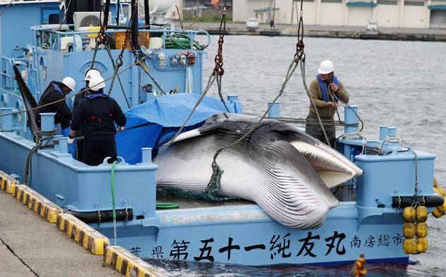 商業捕鯨が再開され、水揚げされたクジラ(北海道釧路市)=共同