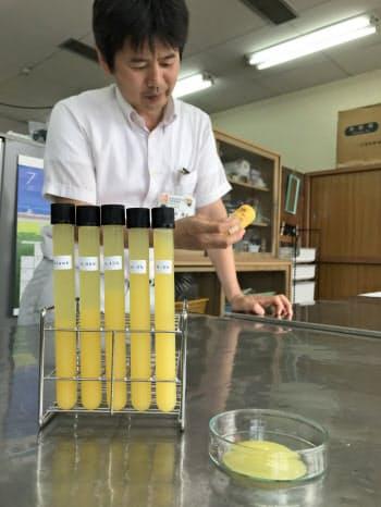 柑橘由来のCNFは液体に混ぜると、右端の試験管のように物質の沈殿を防ぐ(松山市)