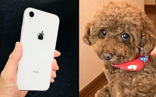 犬並みの嗅覚を持つ「においセンサー」を開発してスマホに搭載する