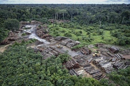 ボルソナロ大統領の下、ブラジルではアマゾンの違法伐採が加速しており、地球環境に与える打撃が強く懸念されている=Ibama・AP