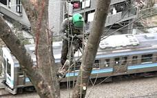走る電車の横で伐採 現代の木こり術で安全に