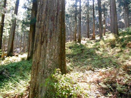 耐震性能が高い木材としてブランド化を目指す(奈良県川上村)