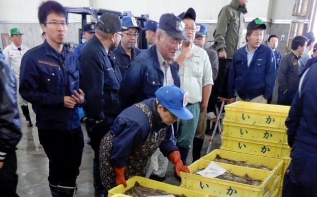 スルメイカの不漁が続いている(函館市水産物地方卸売市場)