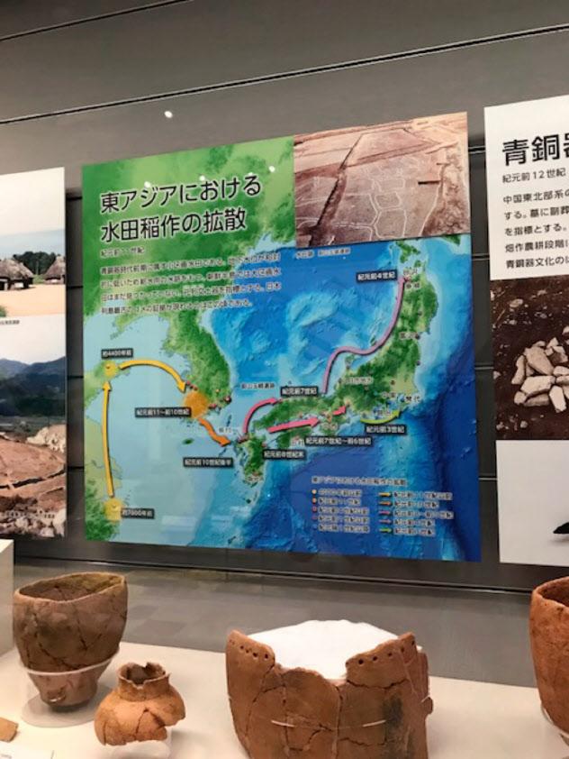 水田稲作が紀元前10世紀に九州北部に伝わったことを展示で示す(国立歴史民俗博物館)