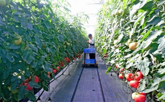 国際認証を取得した農場での生産物を増やす(イオン子会社イオンアグリ創造の農場)