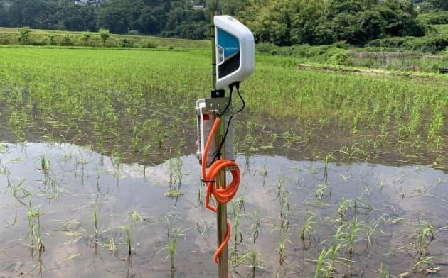 パディウォッチは水田にセンサーを差し込んで水位や水温などを把握する