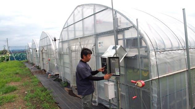 果実堂は雨風に強い最新のビニールハウスを増設した(熊本県菊陽町)
